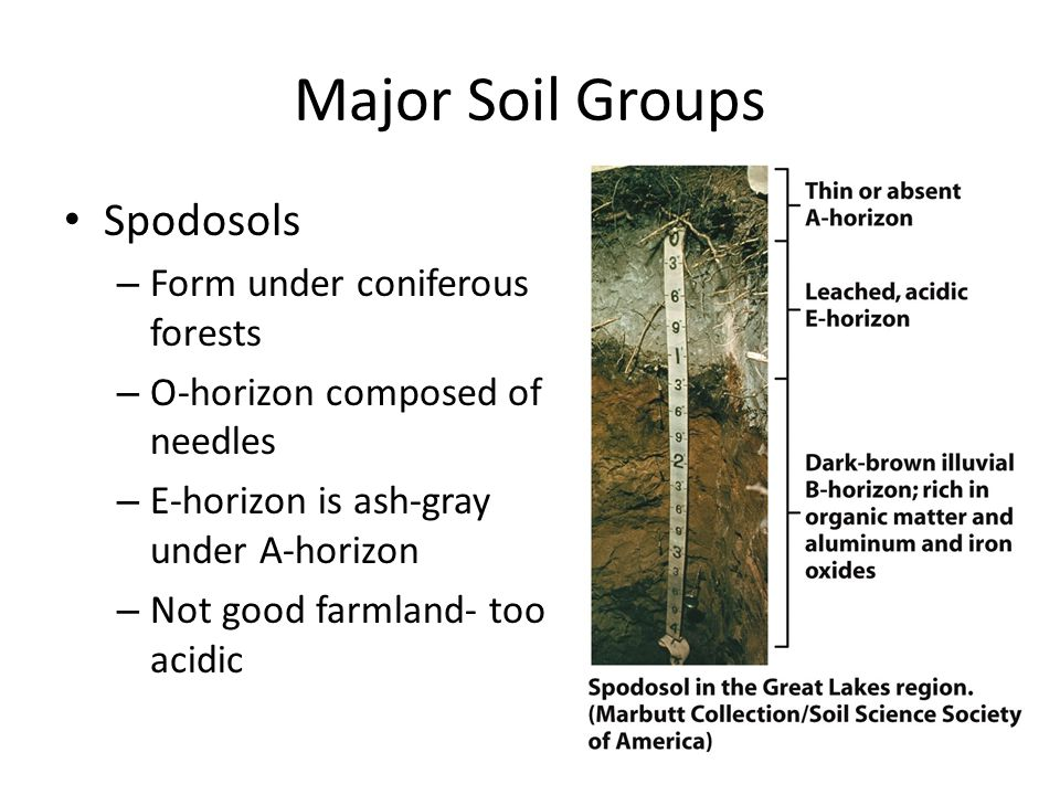 Major Soil Groups Alfisols – Brown to gray-brown A- horizon – Precipitation high enough to leach most organics and nutrients out of O-, A- and B- horizons – Soil fertility maintained by leaf litter