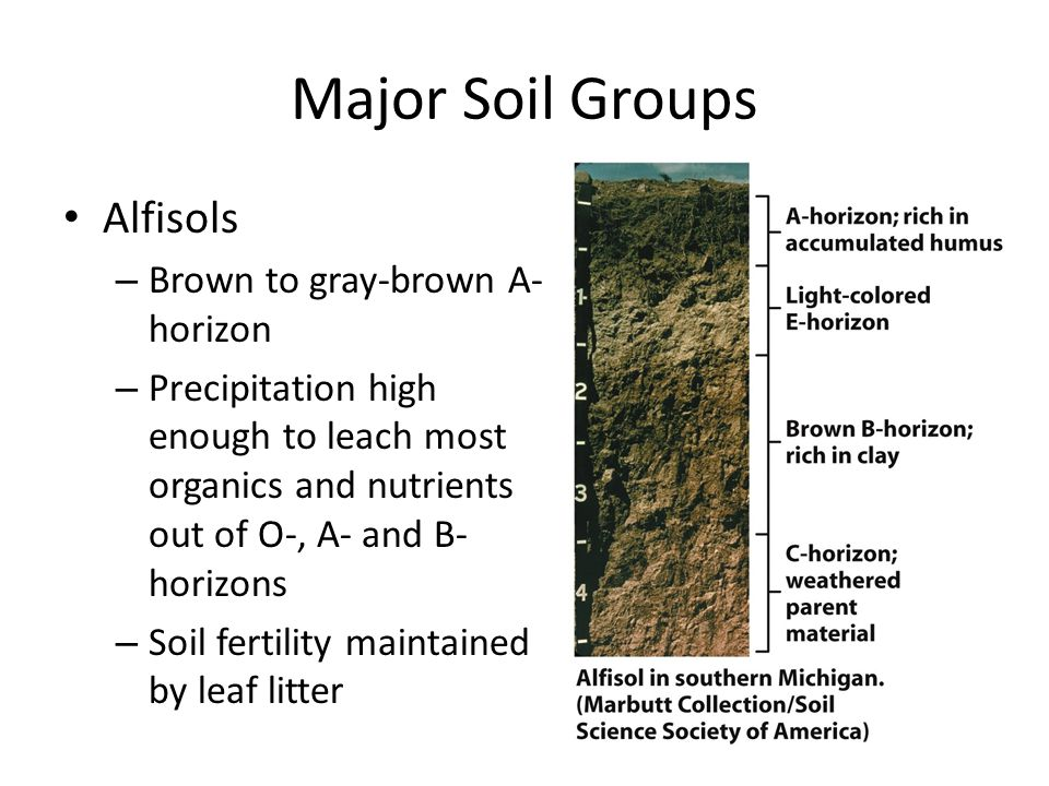 Major Soil Groups Alfisols – Brown to gray-brown A- horizon – Precipitation high enough to leach most organics and nutrients out of O-, A- and B- hori