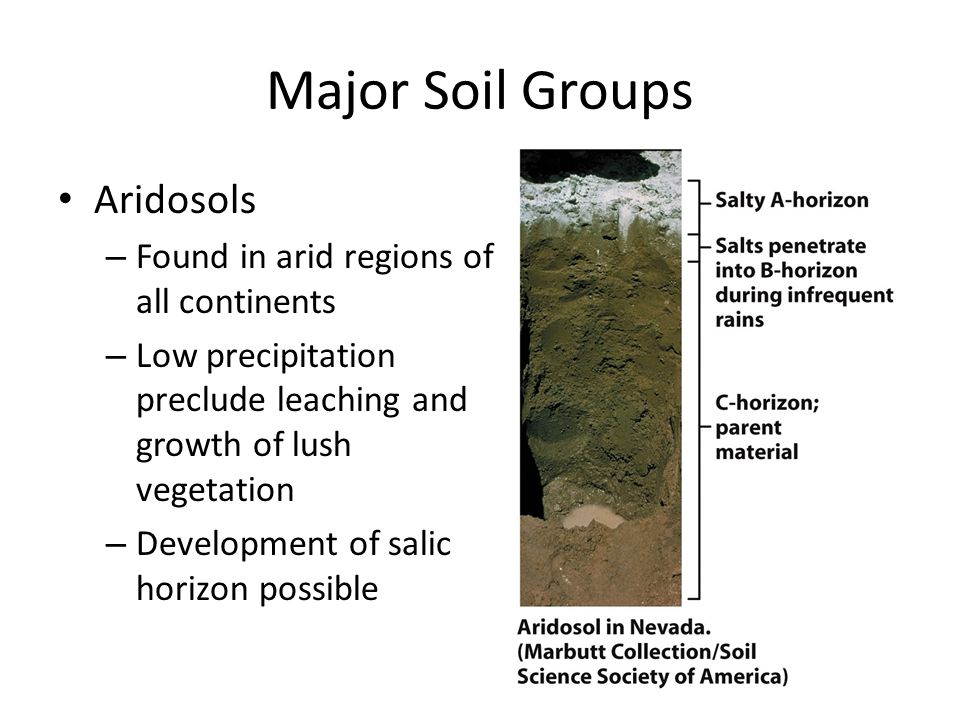 Major Soil Groups Oxisols – Found in tropical and subtropical areas with high precipitation – Very little organic material accumulation due to fast decay rate – B-horizon is highly leached and nutrient poor