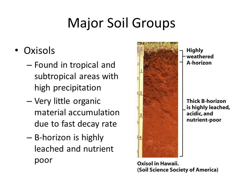 Major Soil Groups Oxisols – Found in tropical and subtropical areas with high precipitation – Very little organic material accumulation due to fast de