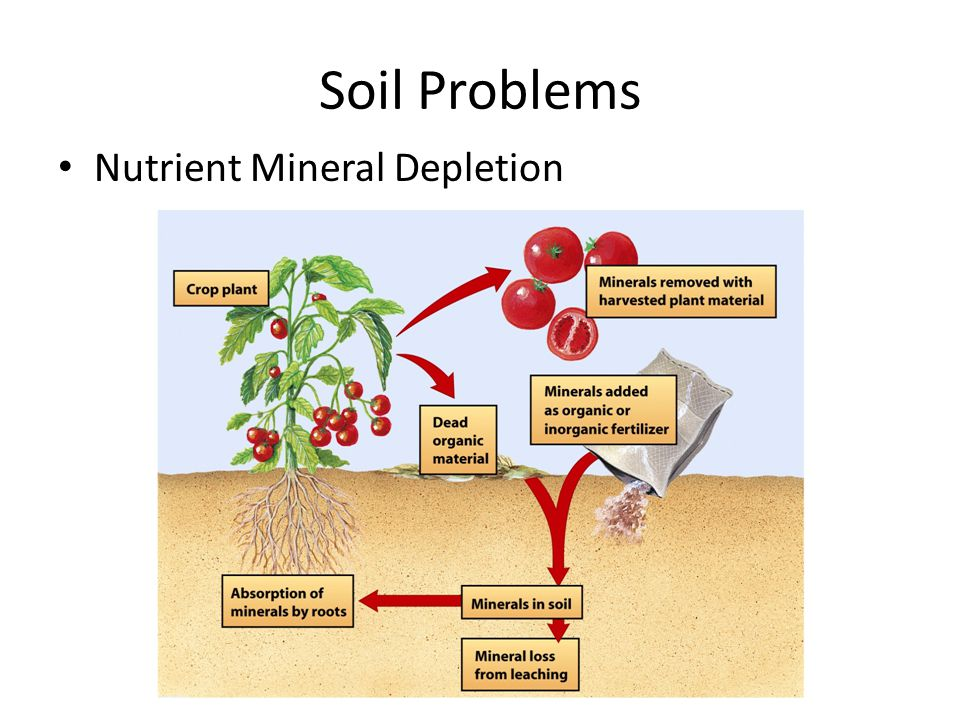 Soil Problems Soil Salinization – Def: gradual accumulation of salt in the soil, usually due to improper irrigation techniques Often in arid and semi-arid areas – The little precipitation that falls is quickly evaporated – Leaves behind salts Salt concentrations get to levels toxic to plants