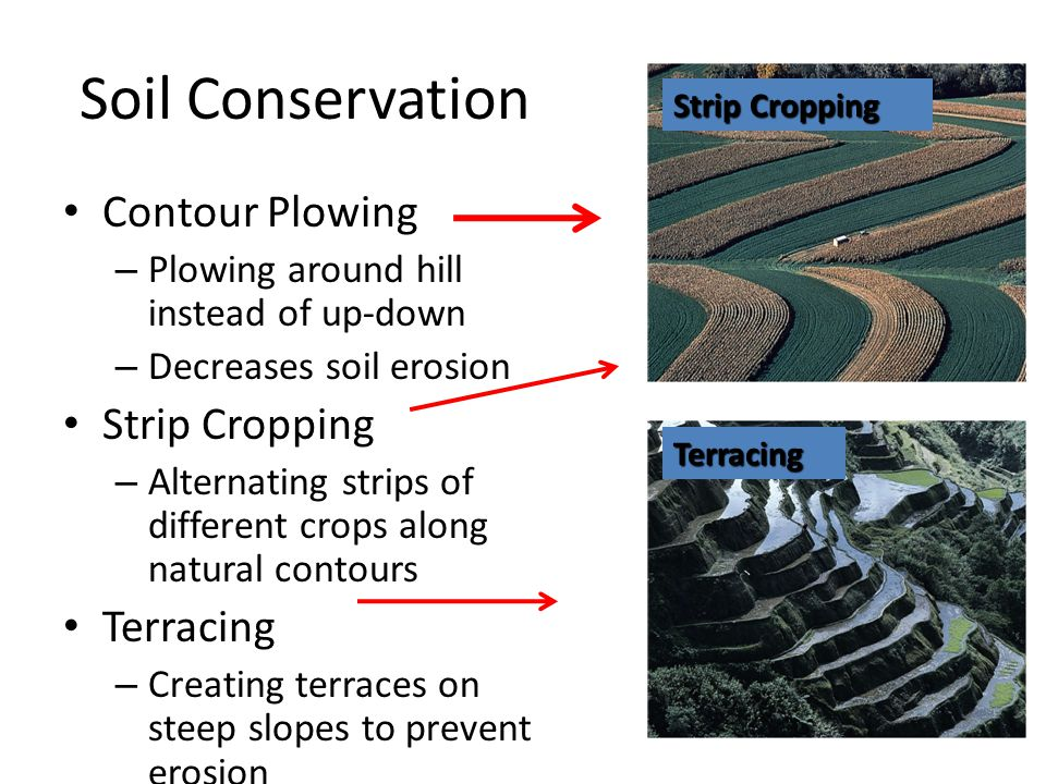 Soil Conservation Contour Plowing – Plowing around hill instead of up-down – Decreases soil erosion Strip Cropping – Alternating strips of different c