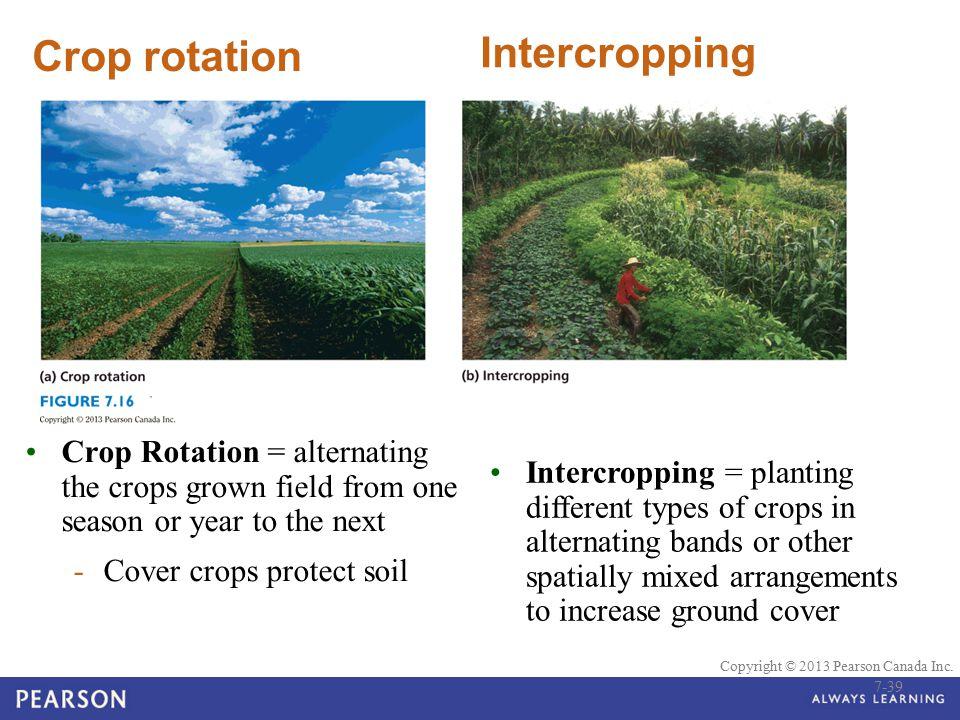 © 2010 Pearson Education Canada Copyright © 2013 Pearson Canada Inc. Crop rotation Crop Rotation = alternating the crops grown field from one season o