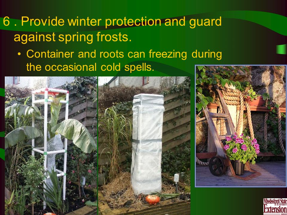 6. Provide winter protection and guard against spring frosts.