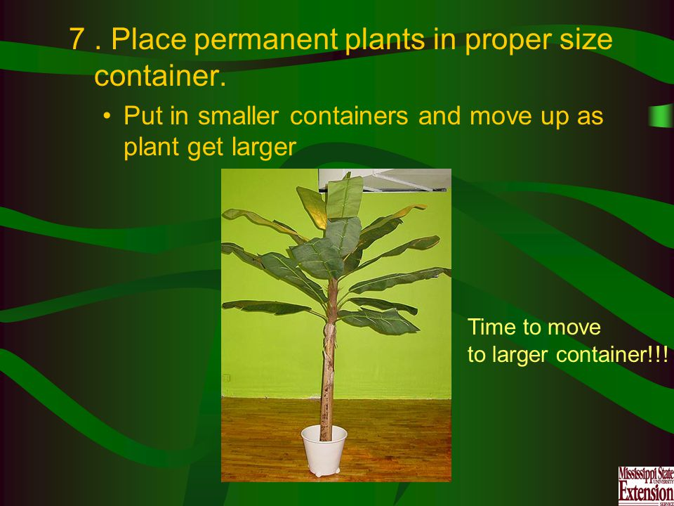 7. Place permanent plants in proper size container.