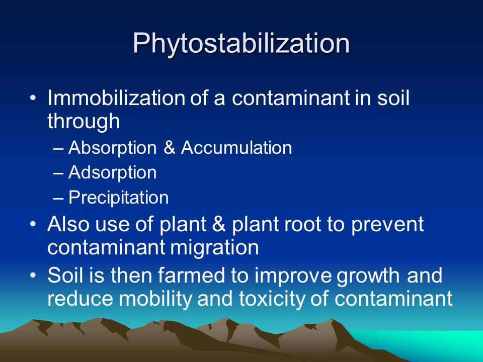 Phytostabilization Immobilization of a contaminant in soil through –Absorption & Accumulation –Adsorption –Precipitation Also use of plant & plant roo