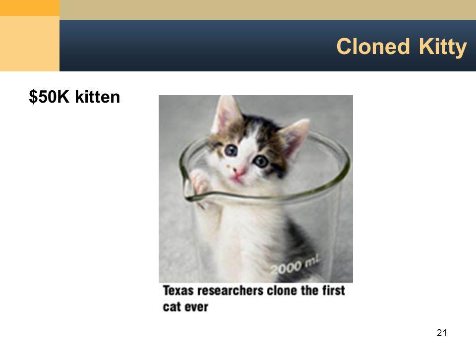 21 Cloned Kitty $50K kitten
