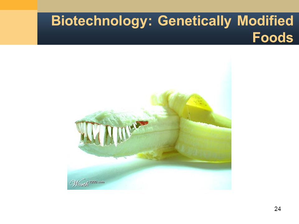 24 Biotechnology: Genetically Modified Foods