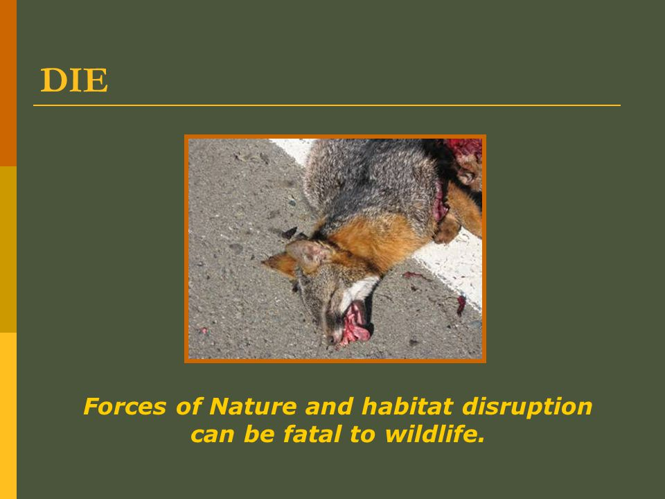 DIE Forces of Nature and habitat disruption can be fatal to wildlife.