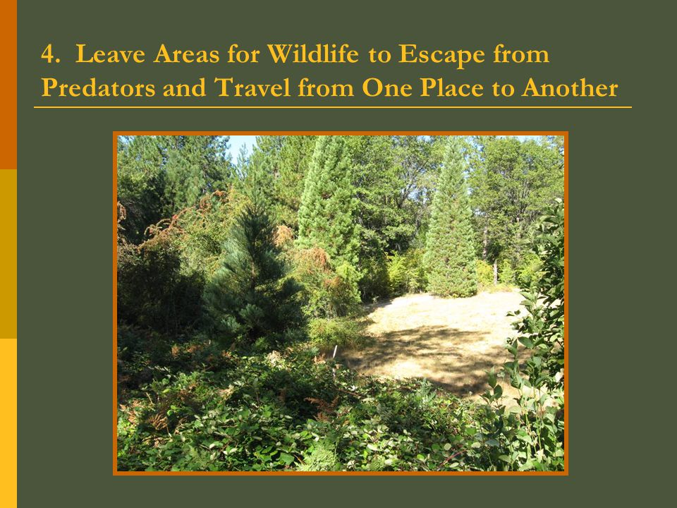 4. Leave Areas for Wildlife to Escape from Predators and Travel from One Place to Another