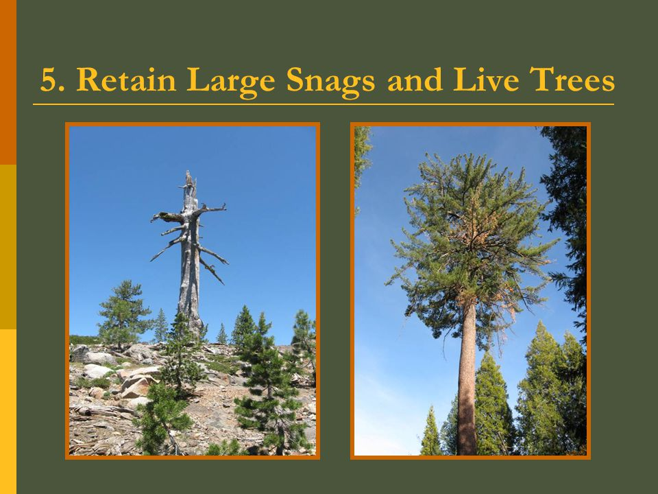 5. Retain Large Snags and Live Trees