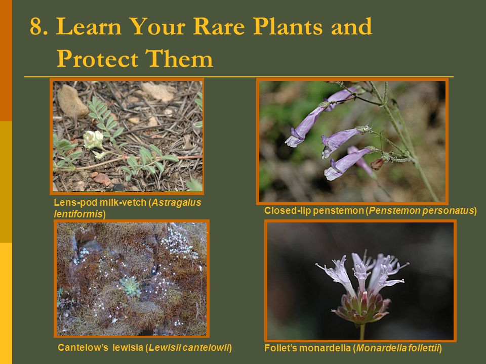 8. Learn Your Rare Plants and Protect Them Lens-pod milk-vetch (Astragalus lentiformis) Closed-lip penstemon (Penstemon personatus) Follet's monardell