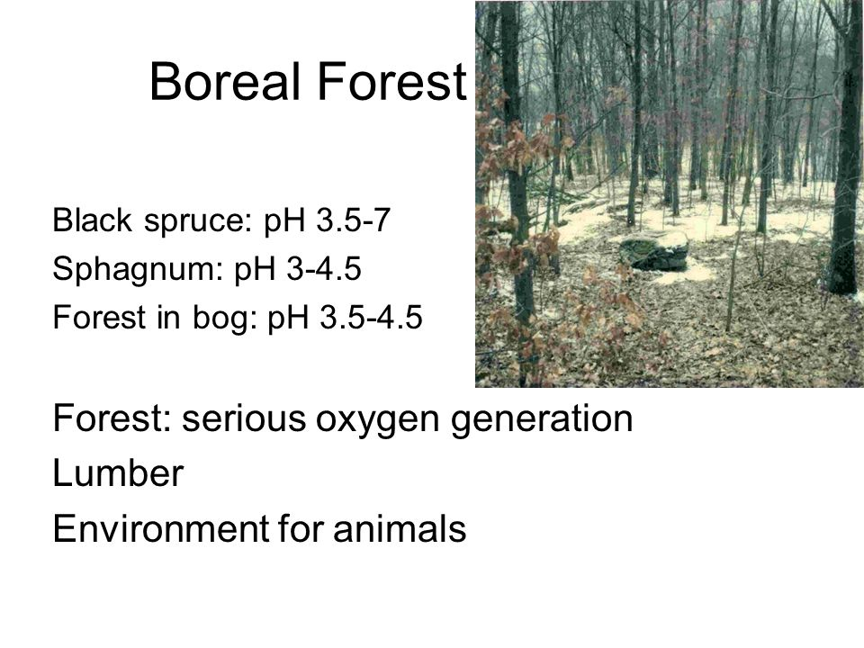 Boreal Forest Black spruce: pH 3.5-7 Sphagnum: pH 3-4.5 Forest in bog: pH 3.5-4.5 Forest: serious oxygen generation Lumber Environment for animals