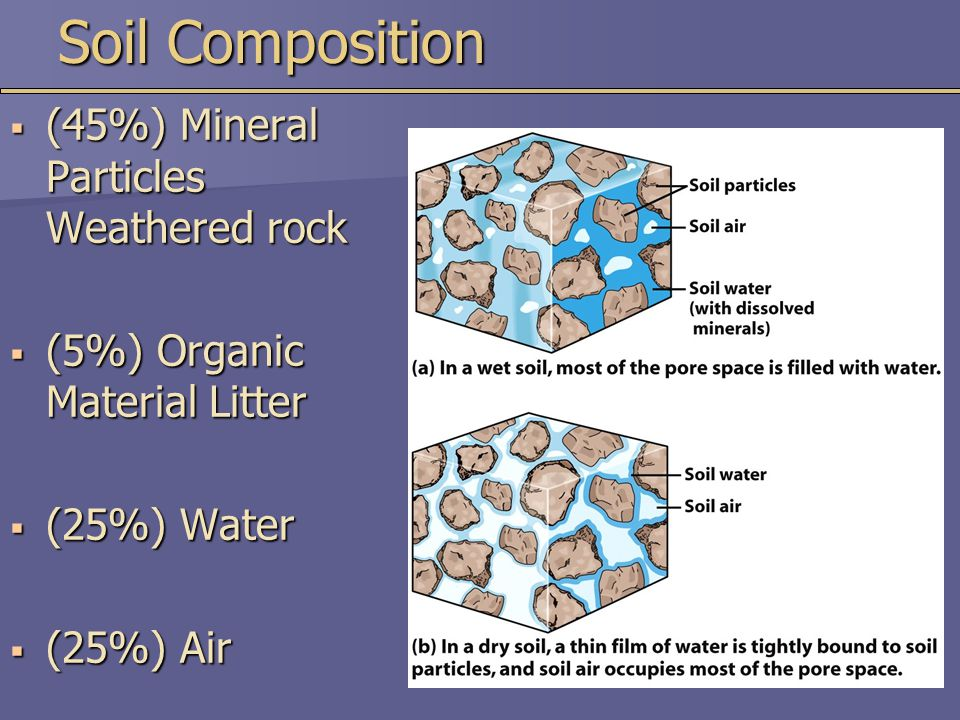 Soil Composition  (45%) Mineral Particles Weathered rock  (5%) Organic Material Litter  (25%) Water  (25%) Air