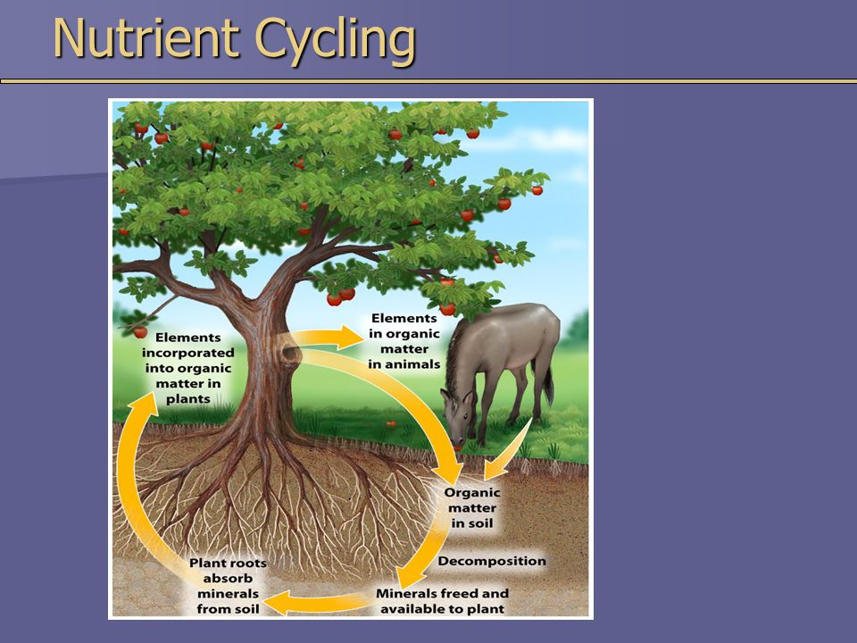 Nutrient Cycling
