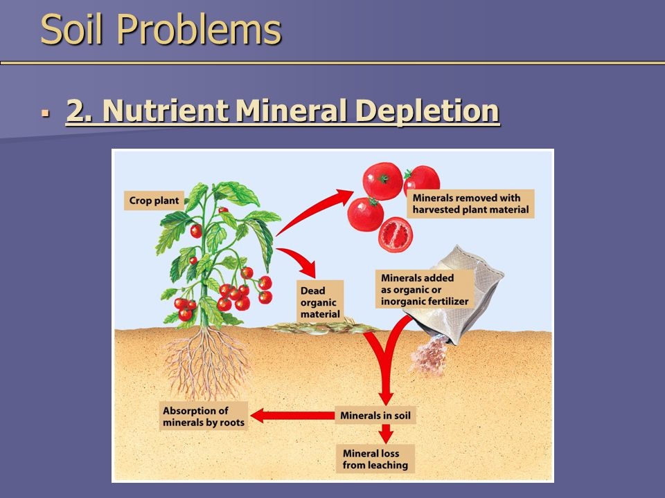 Soil Problems  2. Nutrient Mineral Depletion