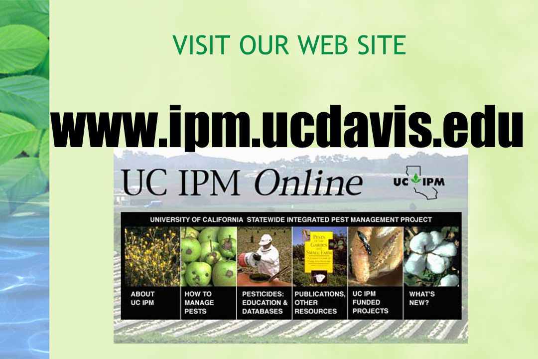 VISIT OUR WEB SITE www.ipm.ucdavis.edu