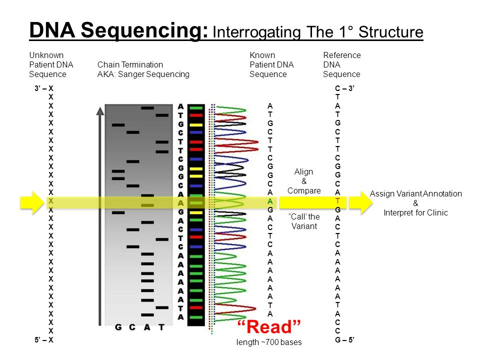 DNA Sequencing: Interrogating The 1° Structure Assign Variant Annotation & Interpret for Clinic C – 3' T A T G C T C G C A T G A C T C A T A C G – 5'