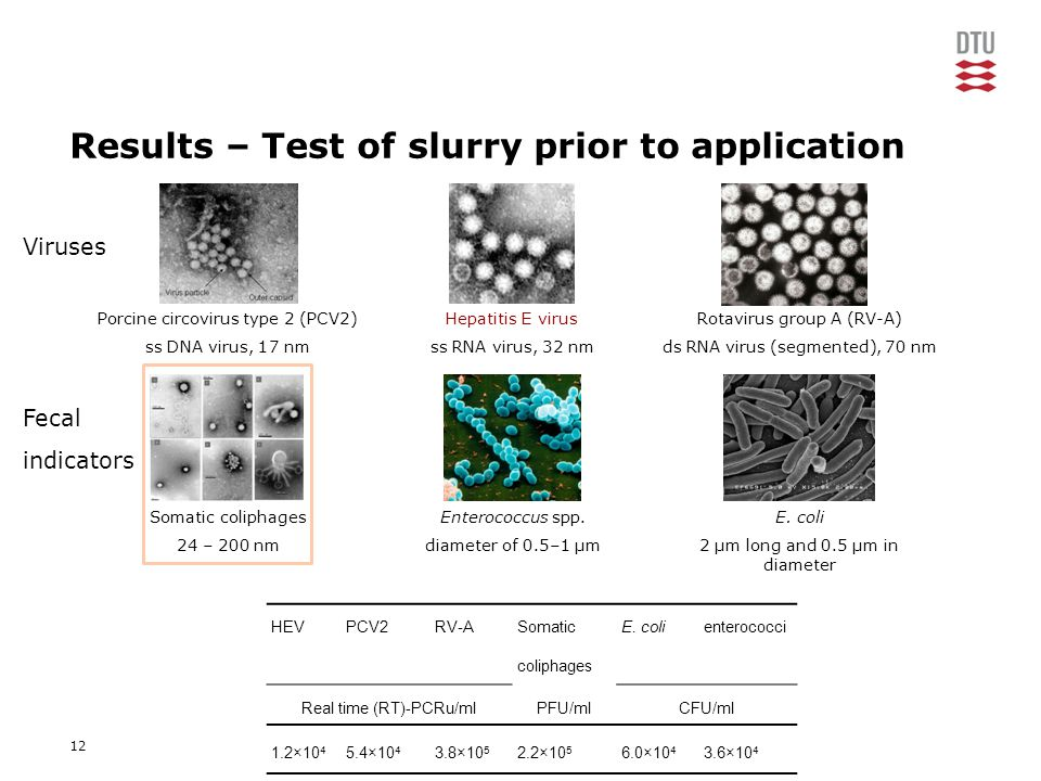 12 Results – Test of slurry prior to application Somatic coliphages 24 – 200 nm Hepatitis E virus ss RNA virus, 32 nm Enterococcus spp.