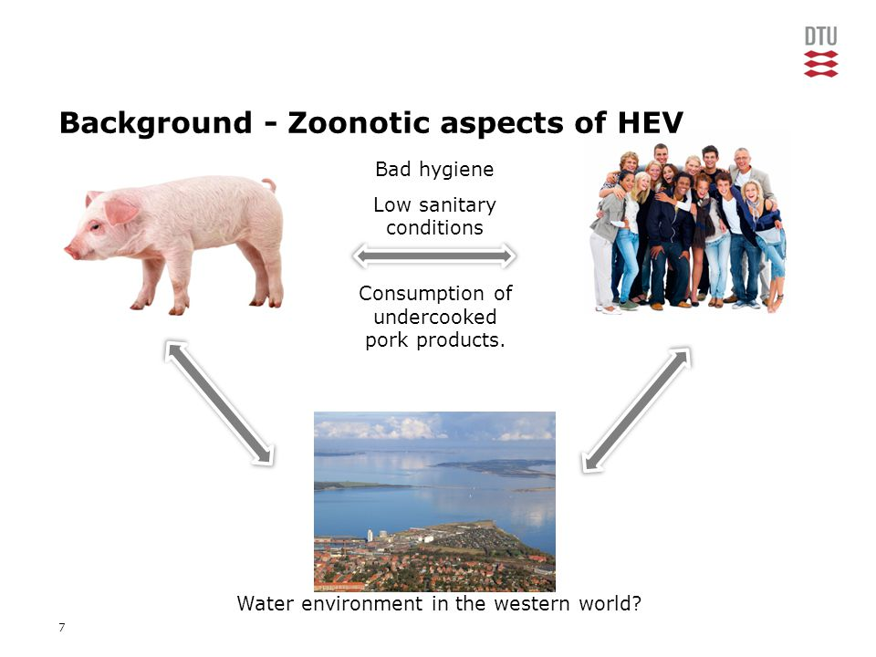 7 Background - Zoonotic aspects of HEV Water environment in the western world.