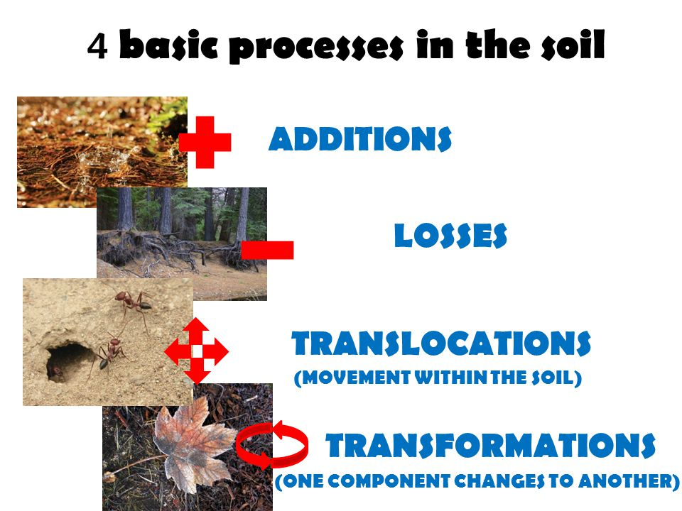 4 basic processes in the soil ADDITIONS LOSSES TRANSLOCATIONS TRANSFORMATIONS (MOVEMENT WITHIN THE SOIL) (ONE COMPONENT CHANGES TO ANOTHER)