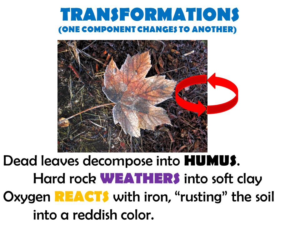 TRANSFORMATIONS Dead leaves decompose into HUMUS.