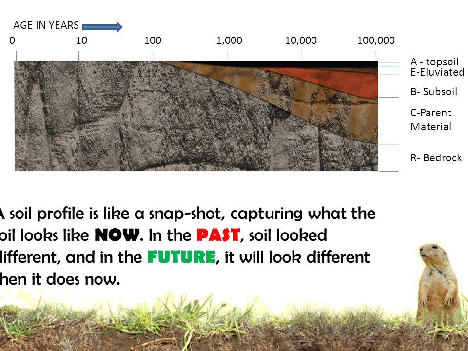 A - topsoil E-Eluviated B- Subsoil C-Parent Material R- Bedrock 0101001,00010,000100,000 AGE IN YEARS A soil profile is like a snap-shot, capturing what the soil looks like NOW.