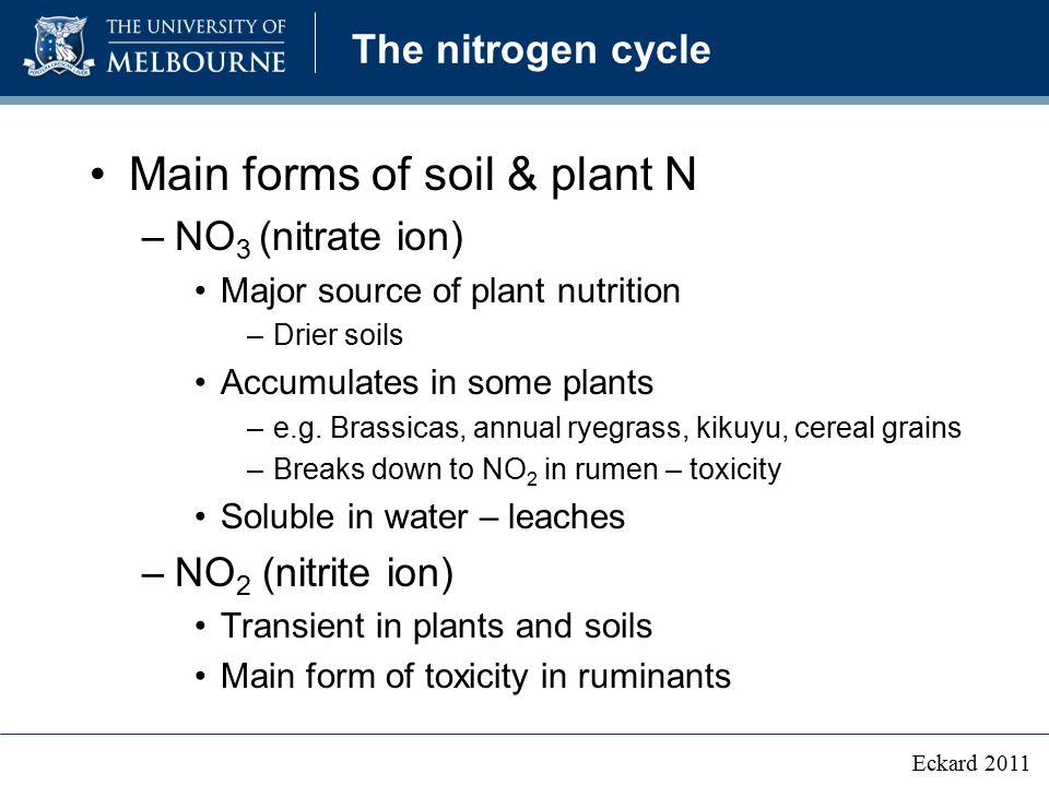 The nitrogen cycle Main forms of soil & plant N –NO 3 (nitrate ion) Major source of plant nutrition –Drier soils Accumulates in some plants –e.g. Bras