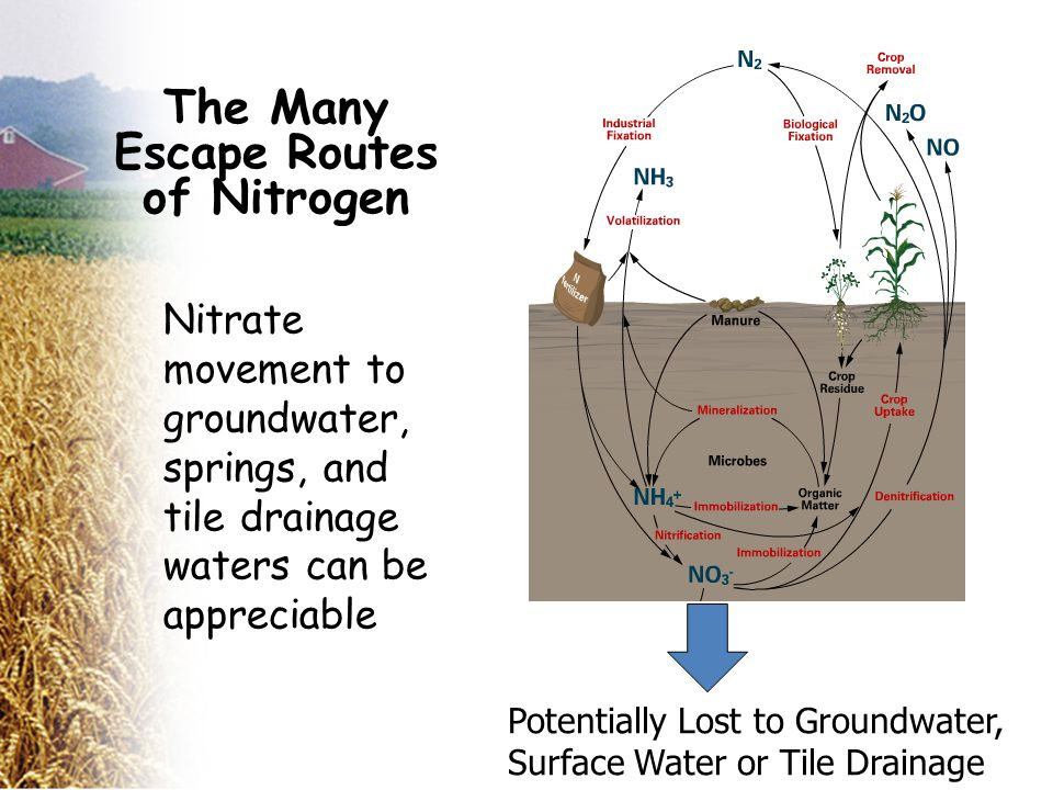 Potentially Lost to Groundwater, Surface Water or Tile Drainage Nitrate movement to groundwater, springs, and tile drainage waters can be appreciable The Many Escape Routes of Nitrogen