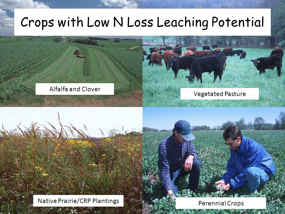 Crops with Low N Loss Leaching Potential Alfalfa and Clover Vegetated Pasture Native Prairie/CRP Plantings Perennial Crops