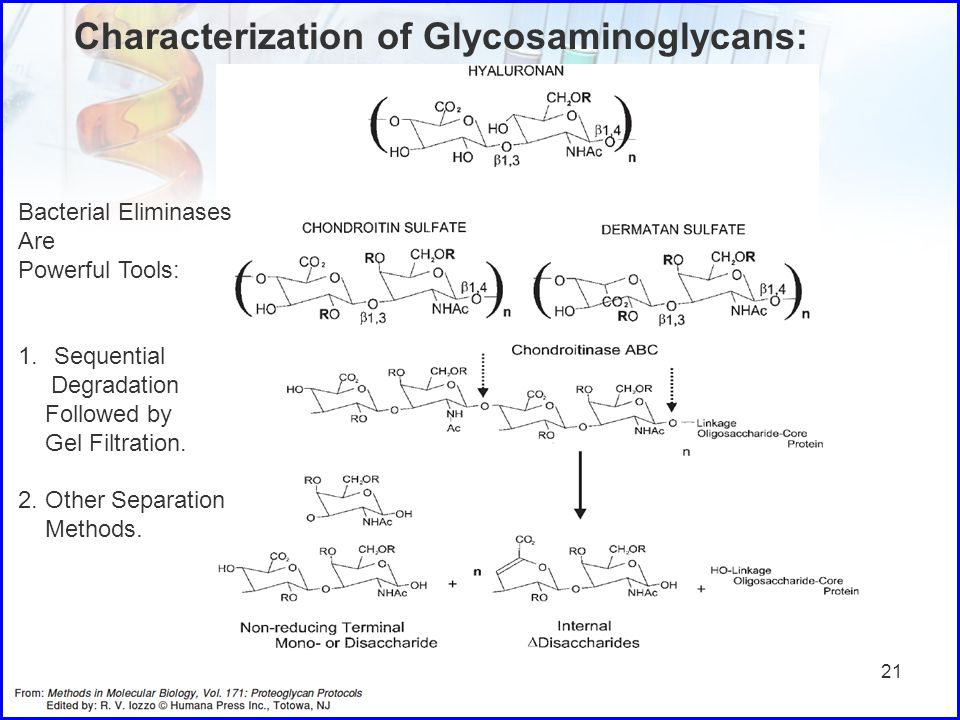 21 Characterization of Glycosaminoglycans: Bacterial Eliminases Are Powerful Tools: 1.Sequential Degradation Followed by Gel Filtration. 2. Other Sepa