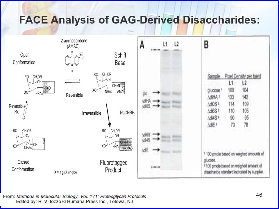 46 FACE Analysis of GAG-Derived Disaccharides: