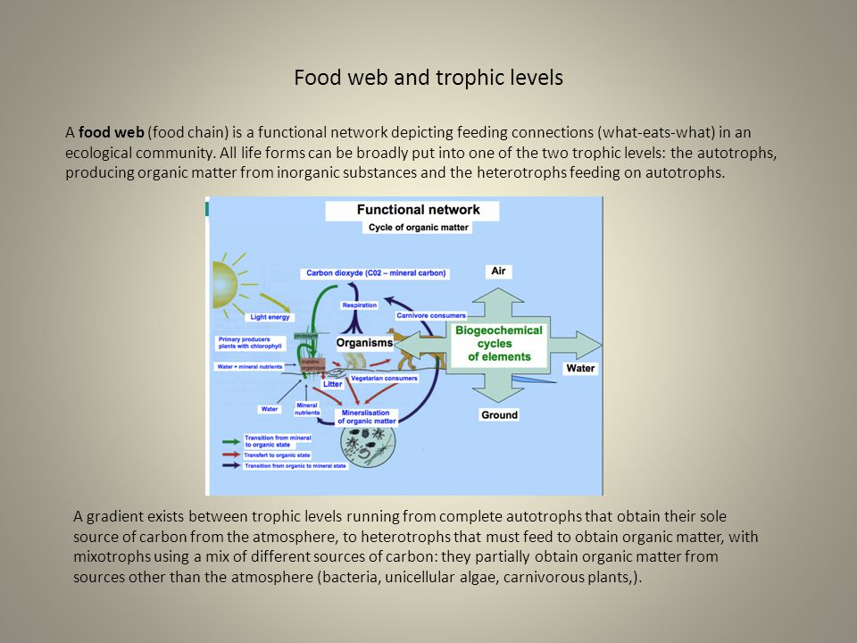 Food web and trophic levels A food web (food chain) is a functional network depicting feeding connections (what-eats-what) in an ecological community.