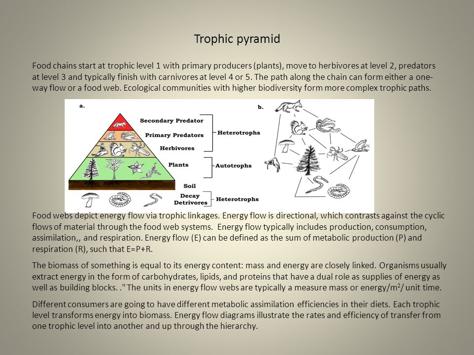 Trophic pyramid Food chains start at trophic level 1 with primary producers (plants), move to herbivores at level 2, predators at level 3 and typicall