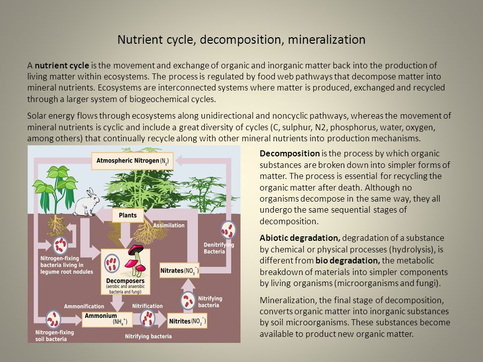 Nutrient cycle, decomposition, mineralization A nutrient cycle is the movement and exchange of organic and inorganic matter back into the production o