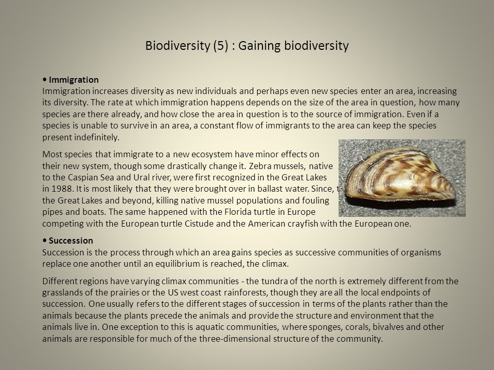 Biodiversity (5) : Gaining biodiversity Immigration Immigration increases diversity as new individuals and perhaps even new species enter an area, inc