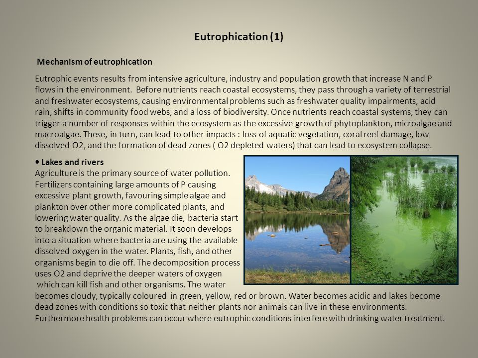 Eutrophication (1) Mechanism of eutrophication Eutrophic events results from intensive agriculture, industry and population growth that increase N and