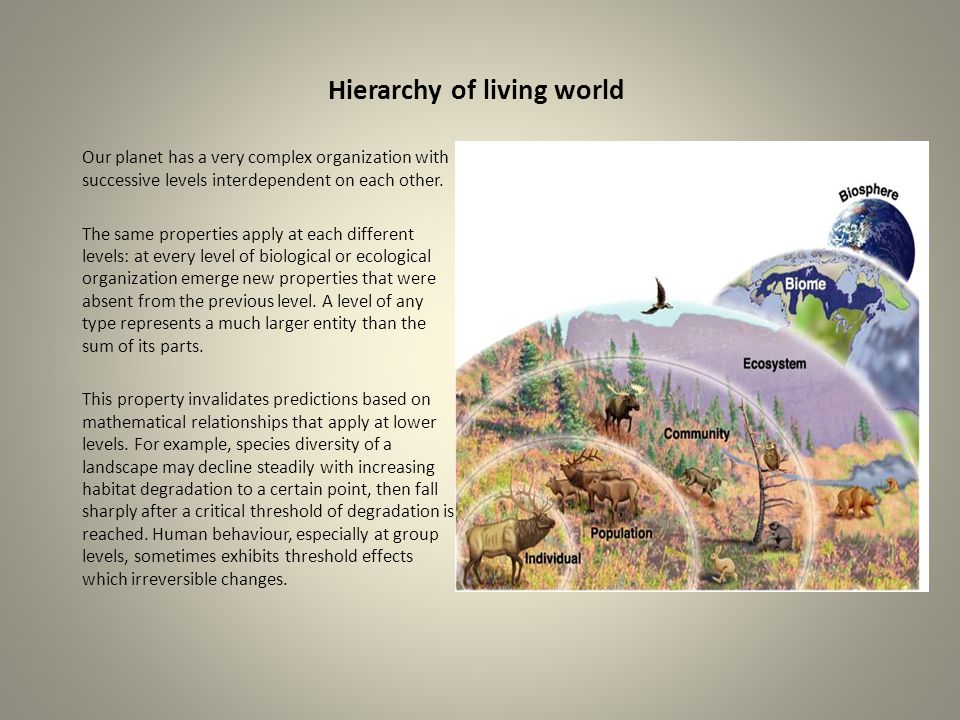 Hierarchy of living world Our planet has a very complex organization with successive levels interdependent on each other. The same properties apply at
