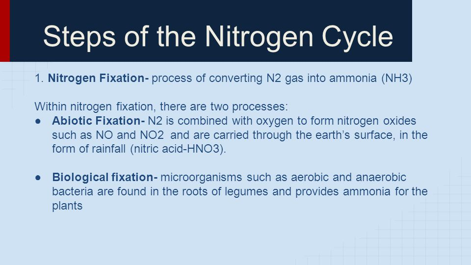 Steps of the Nitrogen Cycle 1.