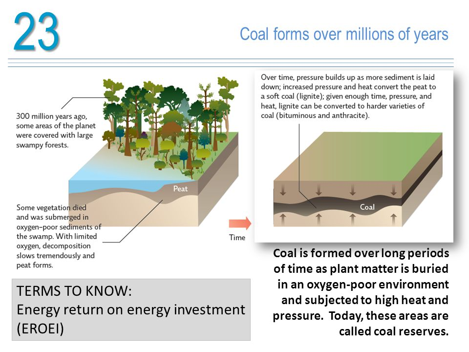 23 Coal forms over millions of years TERMS TO KNOW: Energy return on energy investment (EROEI) Coal is formed over long periods of time as plant matte