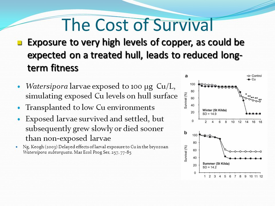 The Cost of Survival Watersipora larvae exposed to 100 µg Cu/L, simulating exposed Cu levels on hull surface Transplanted to low Cu environments Exposed larvae survived and settled, but subsequently grew slowly or died sooner than non-exposed larvae Ng, Keogh (2003) Delayed effects of larval exposure to Cu in the bryozoan Watersipora subtorquata.