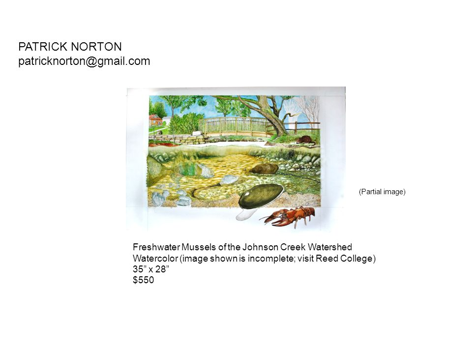 """Freshwater Mussels of the Johnson Creek Watershed Watercolor (image shown is incomplete; visit Reed College) 35"""" x 28"""" $550 PATRICK NORTON patricknort"""