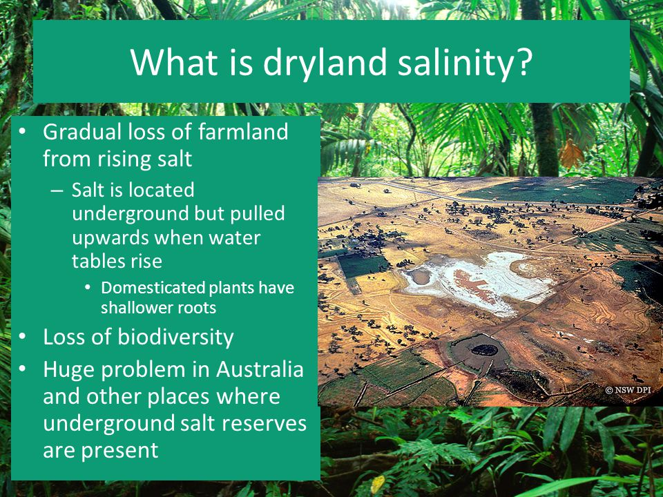 What is dryland salinity? Gradual loss of farmland from rising salt – Salt is located underground but pulled upwards when water tables rise Domesticat