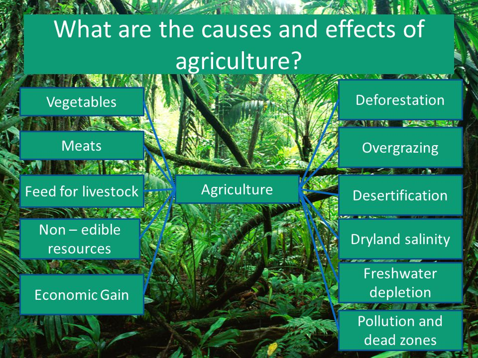 What are the causes and effects of agriculture? Agriculture Vegetables Meats Feed for livestock Non – edible resources Economic Gain Deforestation Ove