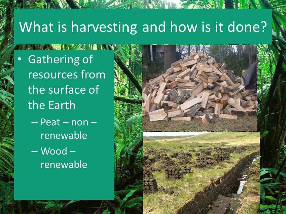 What is harvesting and how is it done? Gathering of resources from the surface of the Earth – Peat – non – renewable – Wood – renewable