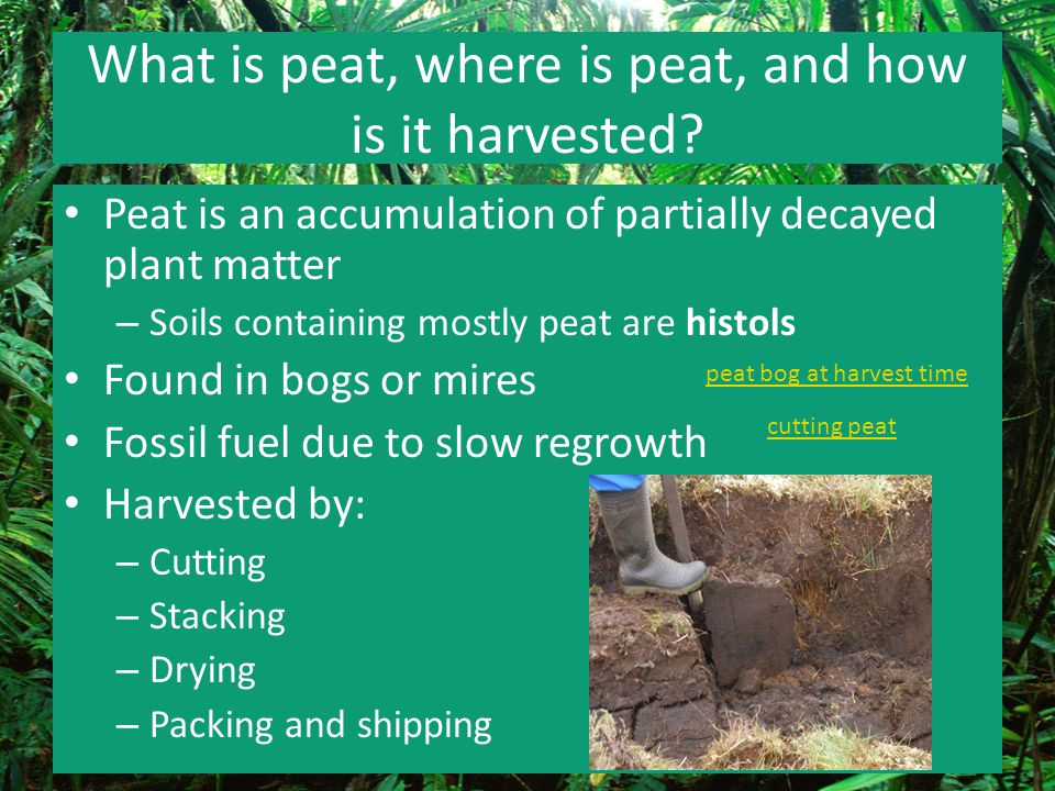 What is peat, where is peat, and how is it harvested? Peat is an accumulation of partially decayed plant matter – Soils containing mostly peat are his