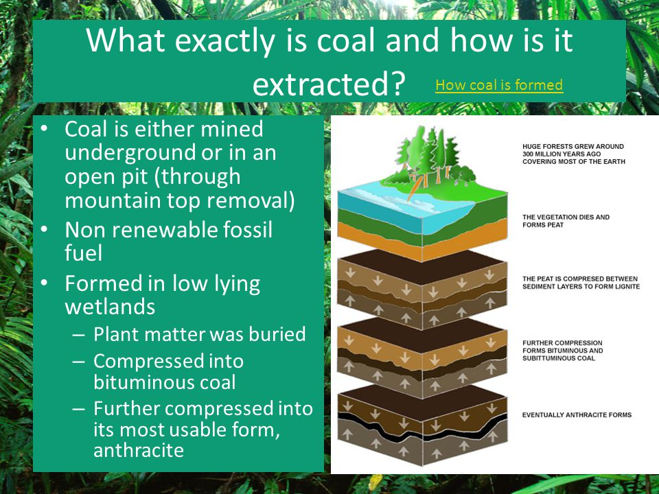 What exactly is coal and how is it extracted? Coal is either mined underground or in an open pit (through mountain top removal) Non renewable fossil f