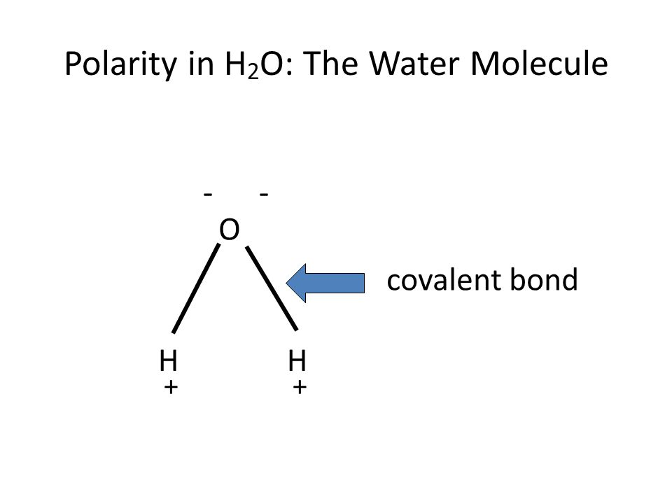 Polarity in H 2 O: The Water Molecule O HH ++ -- covalent bond