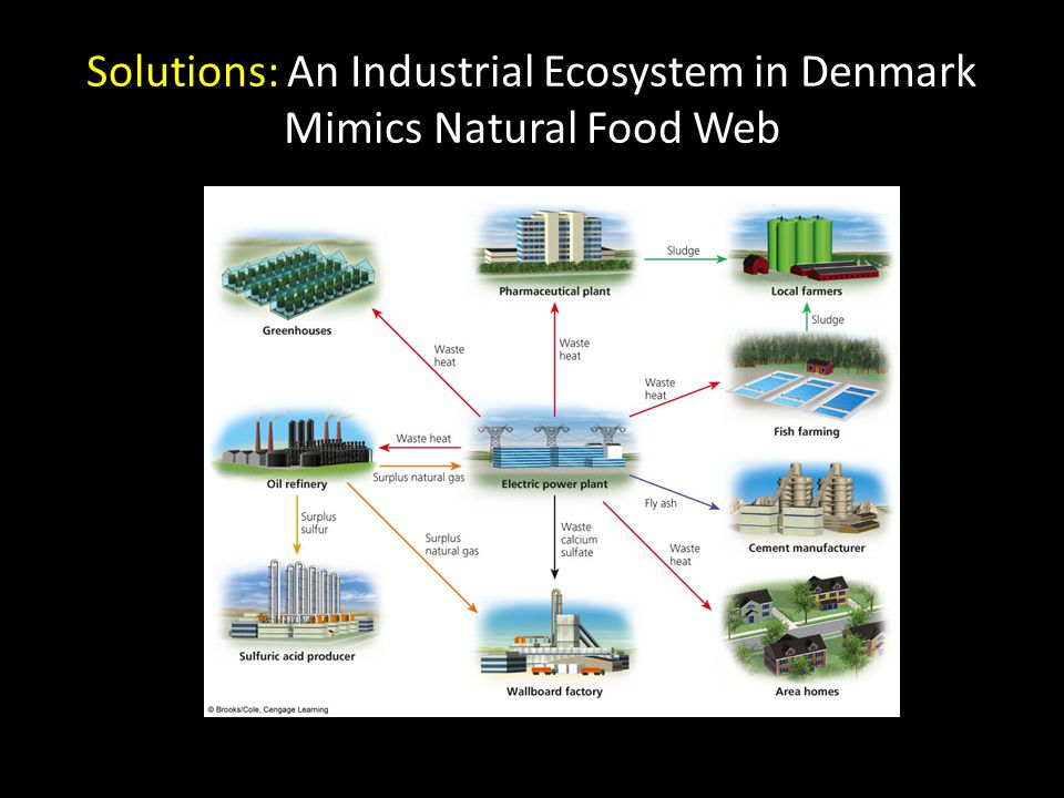 Solutions: An Industrial Ecosystem in Denmark Mimics Natural Food Web