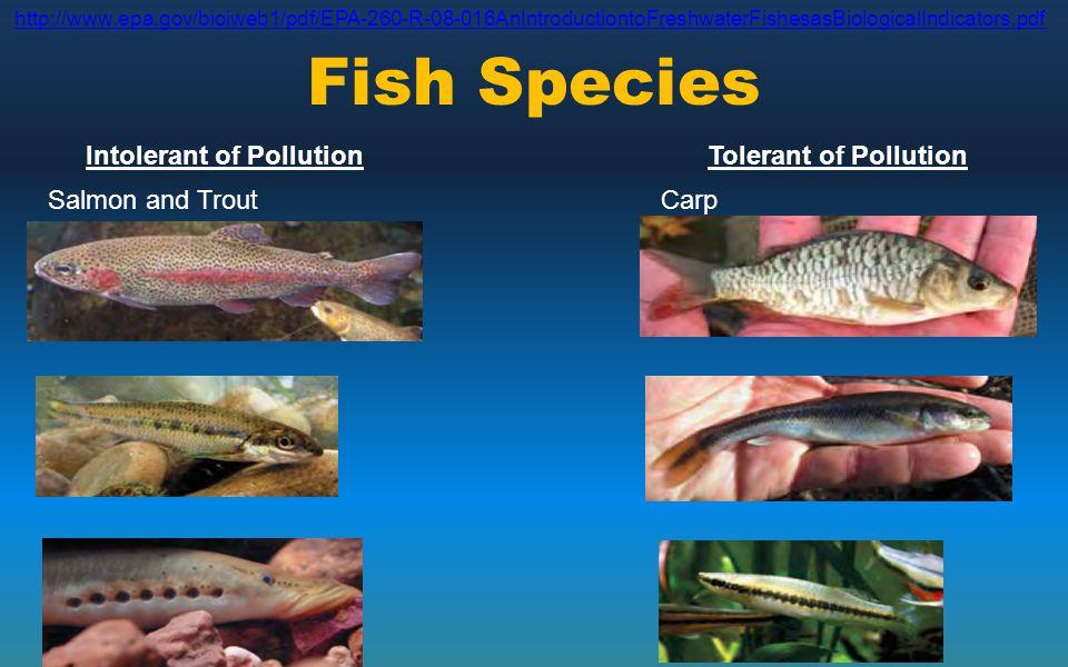 Fish Species Intolerant of PollutionTolerant of Pollution Salmon and Trout Streamline chub Lamprey Carp Creek Chub Blackstripe Minnow http://www.epa.g